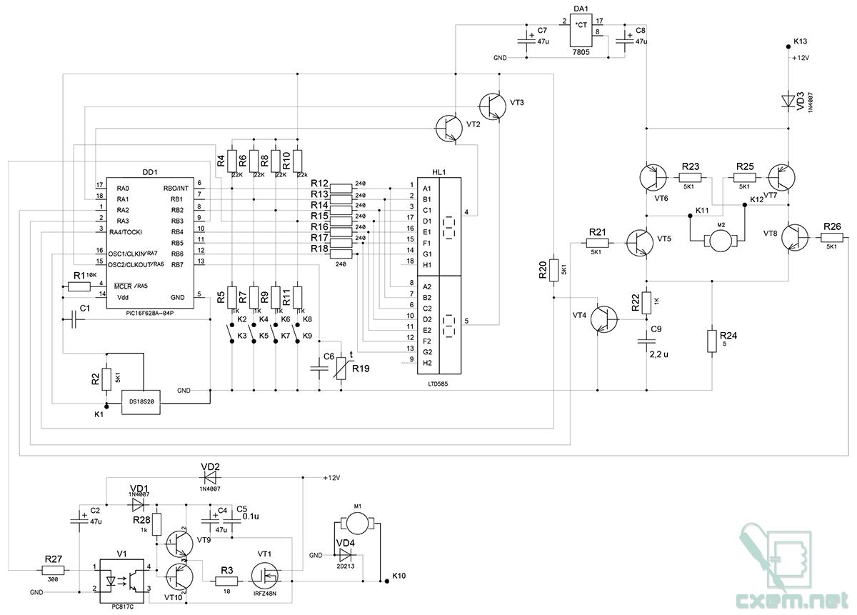 Схема красного клена